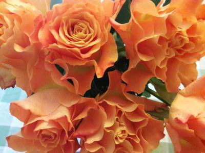 Fringey roses (credit: Maria Carnegie)